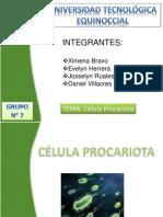 9_celula_procariota