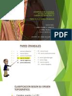 IV par craneal diapo
