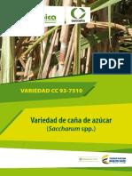 Variedad CC 937711 Caña