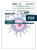 TA-2017-2-M1 NEUROANATOMIA(1)