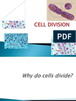 Cell Divisionmitosismeiosis Autosaved