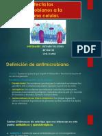 Como Afecta Los Antimicrobianos a La Membrana Celular