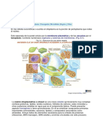 citoplasma y substancias ergáticas.pdf