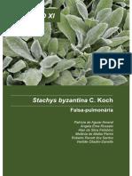 Stachys Byzantina Falsa-pulmonária