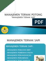 Manajemen Ternak Sapi Ppt