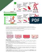 Celula Tejidos Organos