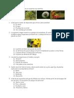 Guia Estudio Ciencias Las Plantas