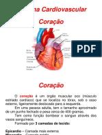 Aula Anatomia Revisão