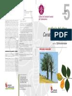 05-Ophiostoma+novo-ulmi.pdf