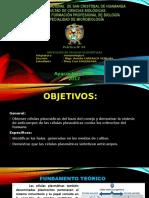 Exposicion de Inmuno Practica (1)