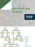 Gangguan Testis dan Scrotum.pptx