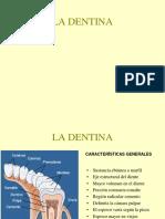 Tema 5 Dentina