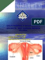 Cicloovarico 141115093252 Conversion Gate02