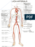Sistem Arterial - Studenti