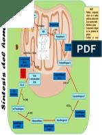 Biosíntesis Del Hem