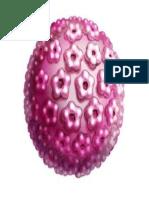 cancer de cervix.docx