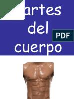 3-partes-del-cuerpo.ppt