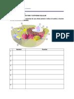 guia_biologia_1_2008_preguntas.pdf