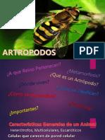 ARTROPODOS2