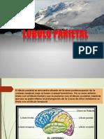 Lobulo Parietal Presentación (Copia )