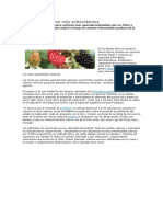 Hojas de Mora Con Más Antioxidantes