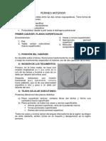 PERINEO ANTERIOR HOMBRE.docx