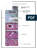 imagenes tejido nervioso.docx