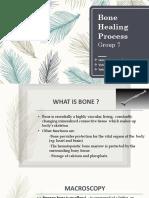 Bone Healing Process