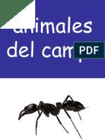 1-animales-del-campo.ppt