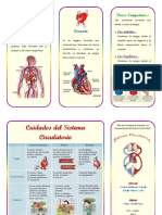 96094820 Triptico de Sistema Circulatorio