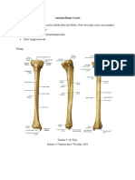 Anatomi Regio Cruris(1)