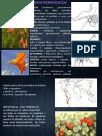 diversidad de angiospermas