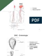 SNC- Anatomia II