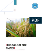 The Cycle of Rice Plants