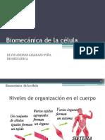 2082748_Biomecánica de La Célula