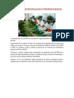 EXPORTACIONES HORTOFRUTÍCOLAS DE ICA CRECIERON 15 VECES EN ÚLTIMOS 15 AÑOS.docx