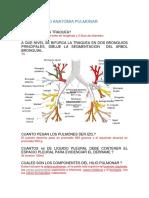 Anatomia CardioPulmonar