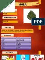 Bernabe.pptx33 (1)