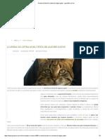 A Lenda Da Letra M Na Testa de Alguns Gatos - GreenMe.com