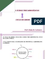 Ciclo Dos Ácidos Tricarboxílicos