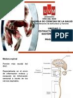 5ta CAT EF Médula Espinal y Tronco Encefálico