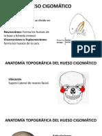 Hueso Cigomático Anatomía Topográfico - Descriptiva e Inserción Muscular