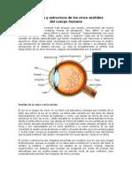 Anatomía y Estructura de Los Cinco Sentidos