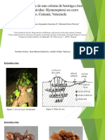 Aspectos Ecológicos de Una Colonia de Hormiga (