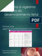 DaNonavigsimasemanadodesenvolvimentofetal_20170311155740