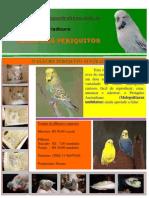 Pagina Da Web - Periquitos