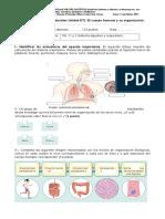 Evaluación Ciencias Naturales Sistema Respiratorio y Respiratorio