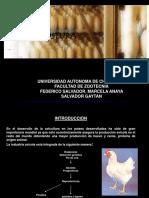 Manejo de Aves en Postura-dic 2010