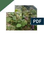Up 53324 Fruticultura Garcia