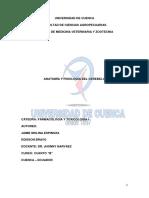 Anatomía y Fisiología Del Cerebelo